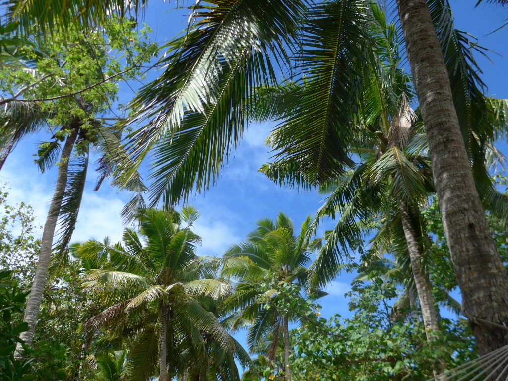 View of sky and palm trees on Fafá Island–quintessential Polynesia.