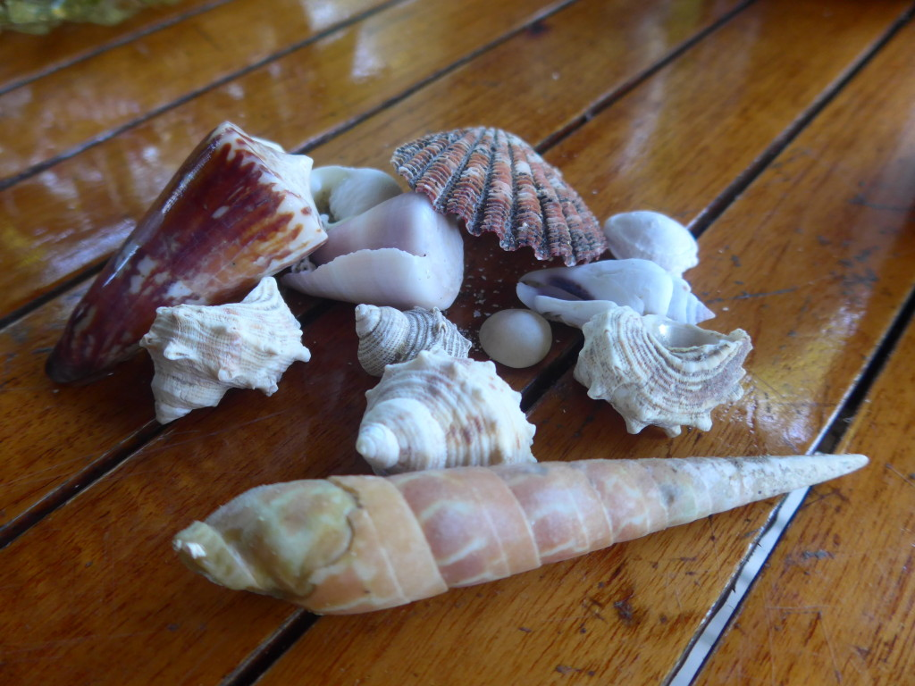 eautiful and unusual shells were collected on the beach in front of our fale.